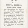 Bristol Bulldog.
