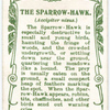The Sparrow-Hawk.