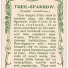 Tree-sparrow.