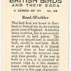 Reed Warbler.