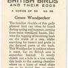Green Woodpecker.