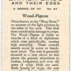 Wood-Pigeon.