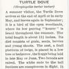 Turtle dove.