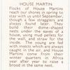 House Martin.