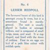 Lesser redpole.