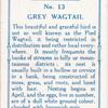 Grey wagtail.