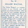 Yellow wagtail.