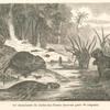 Les myopotames du Jardin-des-Plantes (nouveau genre de rongeurs).
