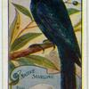 Native Starling.