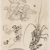[Langouste, plantes avec oiseaux.]