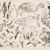 Poissons, oiseaux, poussin.