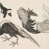 [Faisans, oiseaux.]