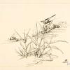 Oiseau sur une pierre, devant des roseaux.