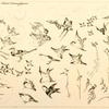 Fleurs et oiseaux japonais.