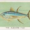 The albicore fish.
