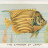The emperor of Japan.