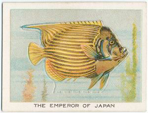 The emperor of Japan. Digital ID: 1150432. New York Public Library