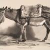 Nouvelles études d'animaux aux deux crayons, no. 3: [Un âne].