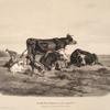 Nouvelles études d'animaux aux deux crayons, no. 5: [Jeune fille gardant des boeufs et une chèvre].