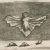 Vespertilio, qui ob corporis molem Cattus Volans dicitur.