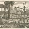 Clematis five vitis alba nostras.
