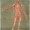 Cette planche représente les muscles & las ligamens, Pl. 4