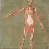 Cette planche représente les muscles qui paroissent ... Pl. 5