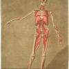Cette planche représente le dernier ordre de muscles, Pl. 6