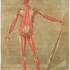 Cette planche représente la troisieme couche des muscles.... Pl. 9