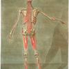 Cette planche représente la derniere couche des muscles.... Pl. 10