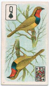 Birds of brilliant plumage.