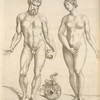 [Nude male with an apple in his left hand,  and a modest female.]