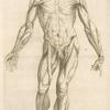 Prima musculorum tabula. [Shows human muscles]