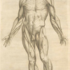 Tertia musculorum tabula. [Showing the figure with open hands]