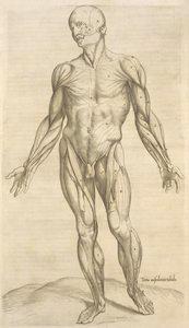 Tertia musculorum tabula. [Showing the figure with open hands]
