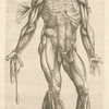 Quarta musculorum tabula. [Shows the muscles with fingers pointing down]