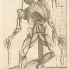 Septima musculorum tabula. [Gruesome figure hanging with a noose around its neck]