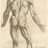 Nona musculorum tabula. [Rear view of the body muscles]