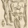Decima quinta musculorum tabula quae preterea continet figuras ...