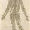 Quanta neruorum tabula. [Human ervous system]