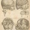 Prima pagina figurarum capitalium [Human brain]