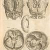 Secunda pagina figurarum capitalium. [Human brain, 5 pictures]