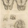 Tertia pagina figurarum capitalium. [9 pictures of the brain and its parts]