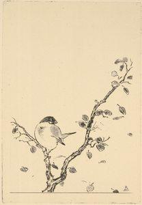 [Un petit oiseau sur une branche.]