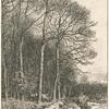Paysage, hiver : lisière de forêt.