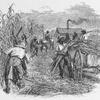 Arbete and sockerplantage.