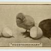 'Eggstrordinary.'