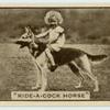 'Ride-a-cock horse.'