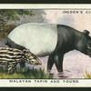 Malayan tapir and young.