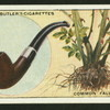 Briar pipes are made from the roots of the Sweetbriar.